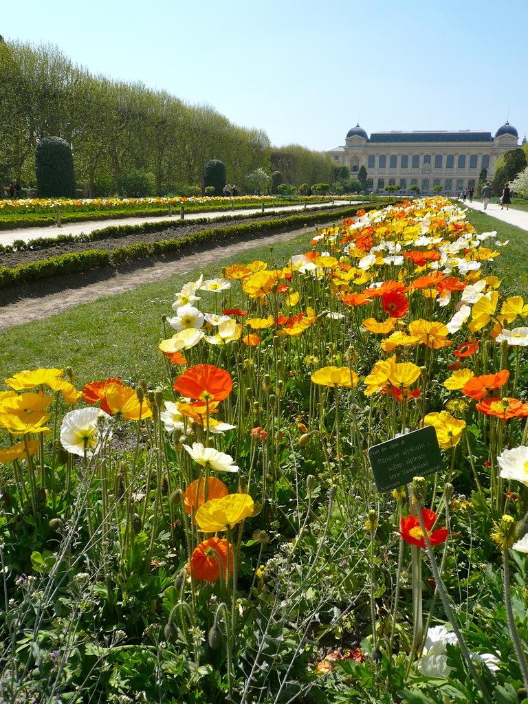 Jardin des plantes bliss in the city - Jardin des plantes rouen adresse ...